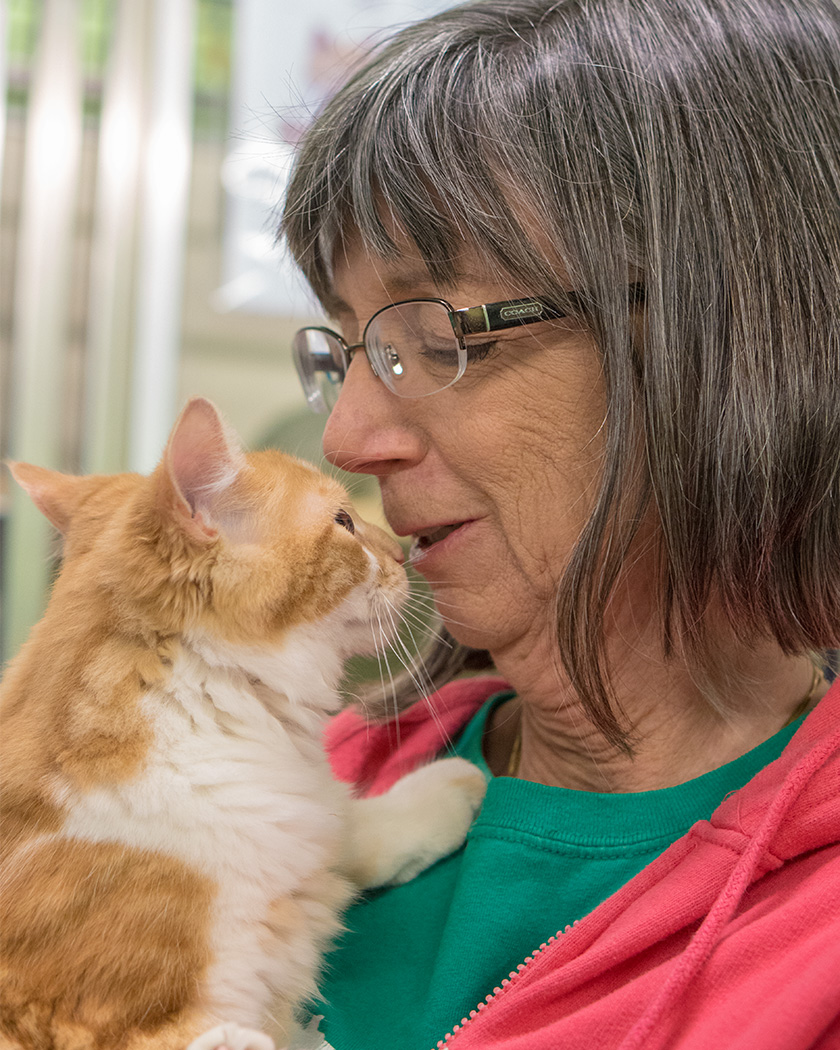 Volunteer with shelter cat