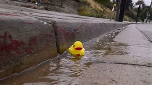 Rubber duck floating in gutter