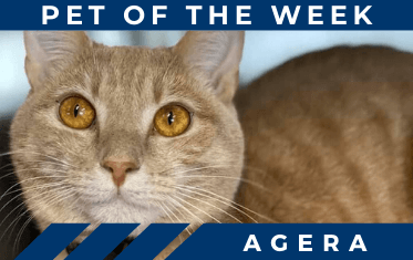 Pet of the Week image