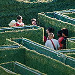 people walking in maze