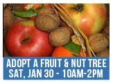 Jammin Jams 2016 Fruit and Nut Tree Adoption Fair, Sat, Jan 30 10am-2pm at the Ernie Morgan Center