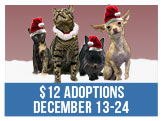 12 Dollar Adoptions for the 12 Days of Christmas, Dec 13-24