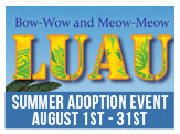 NACC Summer Luau Animal Adoption Event, August 1-31