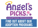 Find out about our adoption programs at NACC.