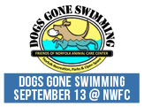 Dogs Gone Swimming. The event is September 13th at the Norfolk Wellness and Fitness Center, 10am-3pm.