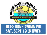Dogs Gone Swimming - Saturday, September 19, 2015, Norfolk Wellness and Fitness Center