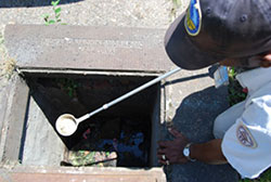 checking-storm-drains-for-mosquito-larva.jpg
